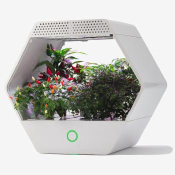 An exagonal grow box called Linfa with plants linging inside it