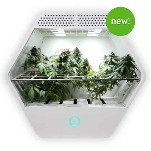 An exagonal grow box called Linfa with powerfull LEDs and legal cannabis plants living inside it